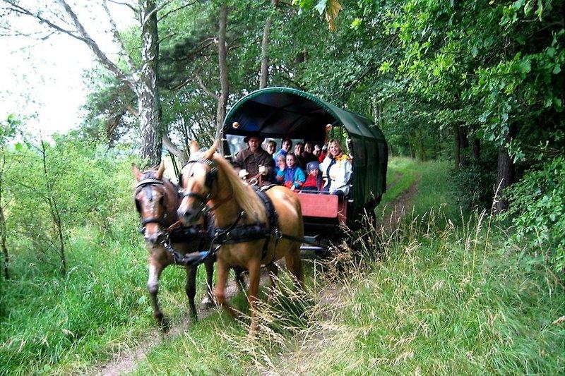 Ferien am See in Hohen Pritz Kukuk