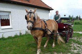 Fewo auch mit eigenem Pferd