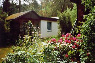 Ferienhaus in Waren (Müritz)