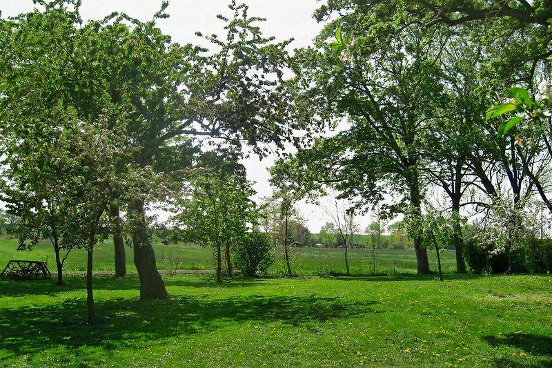 Blick in den Garten, im Hintergrund der Elbdeich
