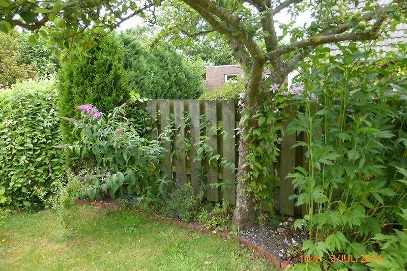 ein kleiner Garten mit Apfelbaum...