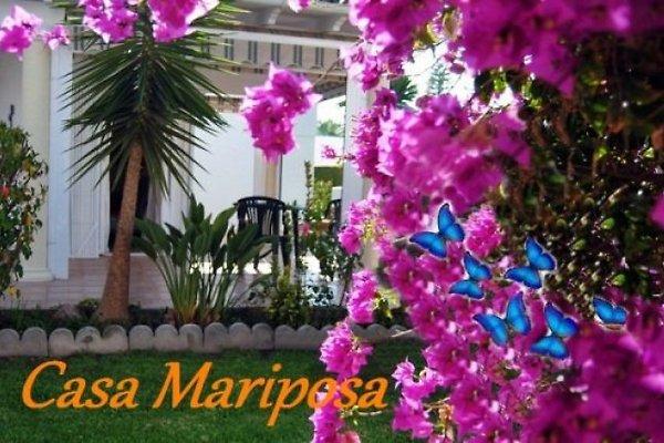 Casa Mariposa à San Juan de los Terreros - Image 1