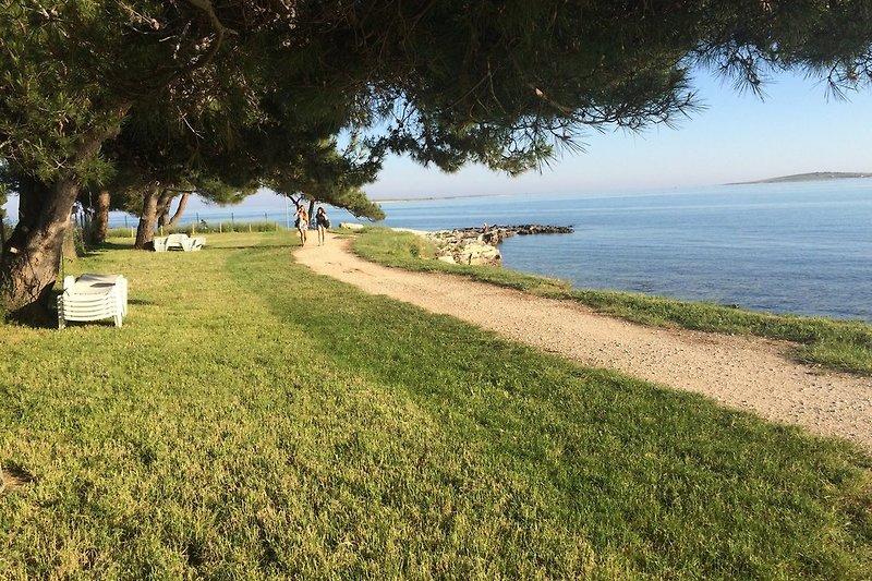 Private Strandparzelle mit Strandliegen unter Pinien