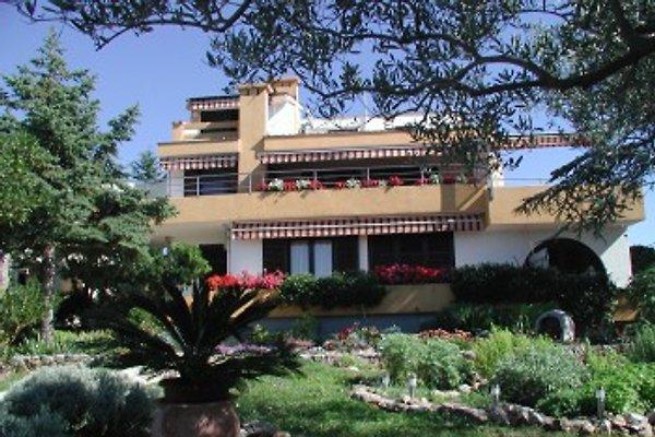 Appartement Buka à Punat - Image 1