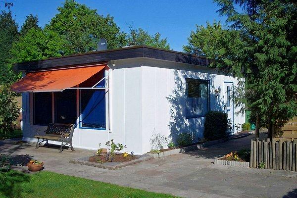 Maison Renesse - Chiens acceptés à Renesse - Image 1