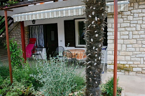 Silvestra - Appartement Palme à Rovinj - Image 1