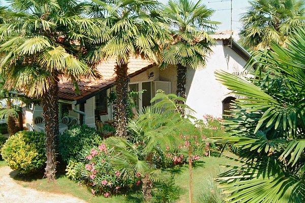 Palma 1 à Poreč - Image 1