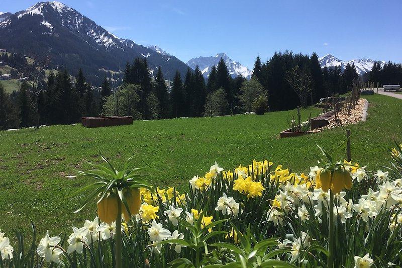 Traumhafte Aussicht ins Tal