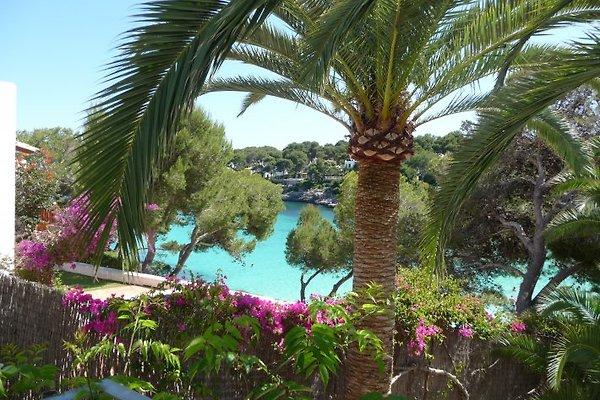Bungalows Playa d'Or - Appartement 2 pièces. à Cala d´Or - Image 1