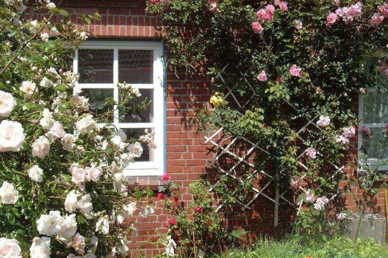 Esszimmerfenster