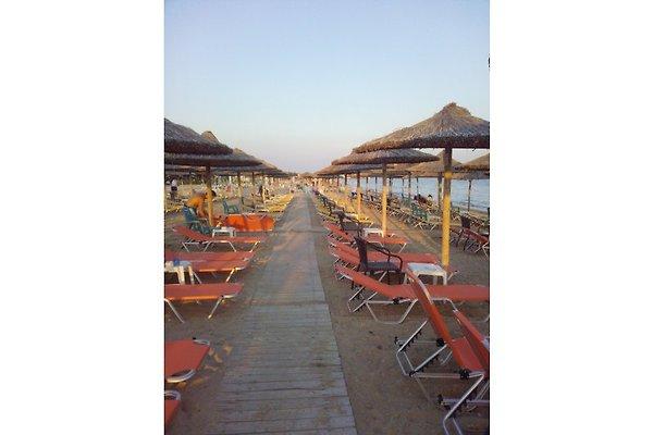 Flogita strand