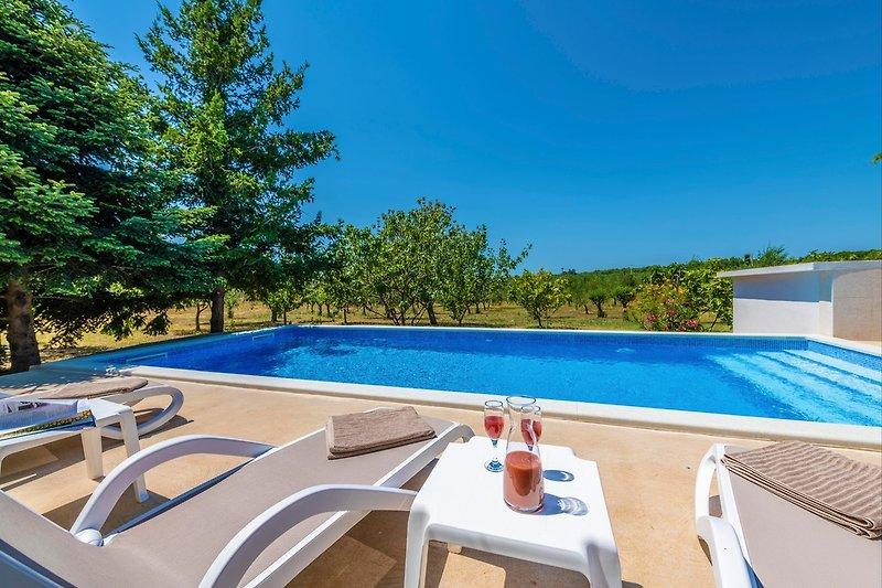 Schwimmbad umgeben von Olivenhainen