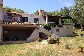 House in olive grove