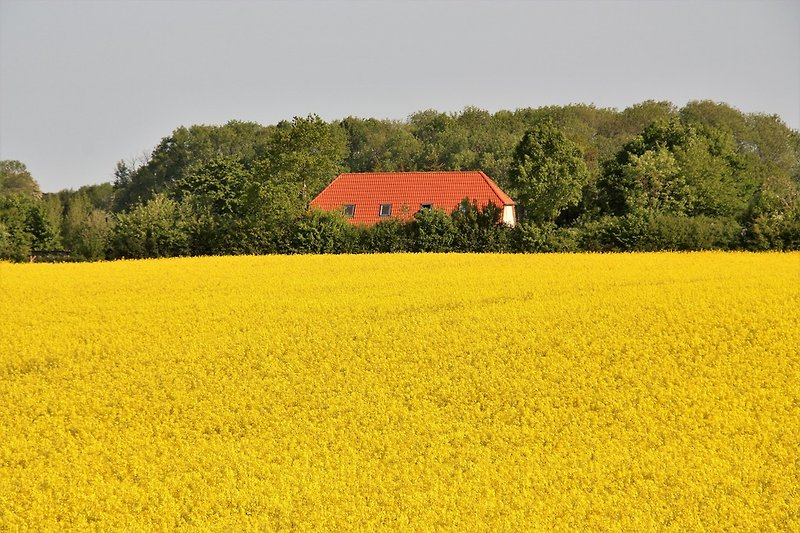 Hygge sieht gelb