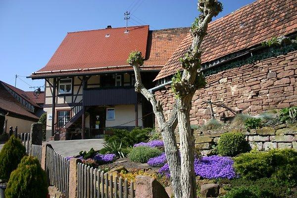 Casa vacanze in Neuhausen - immagine 1