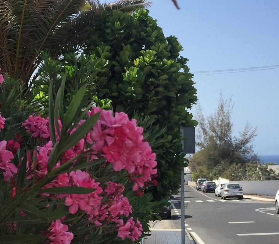La Cesto - apartman za odmor u Puerto del Carmen unajmiti