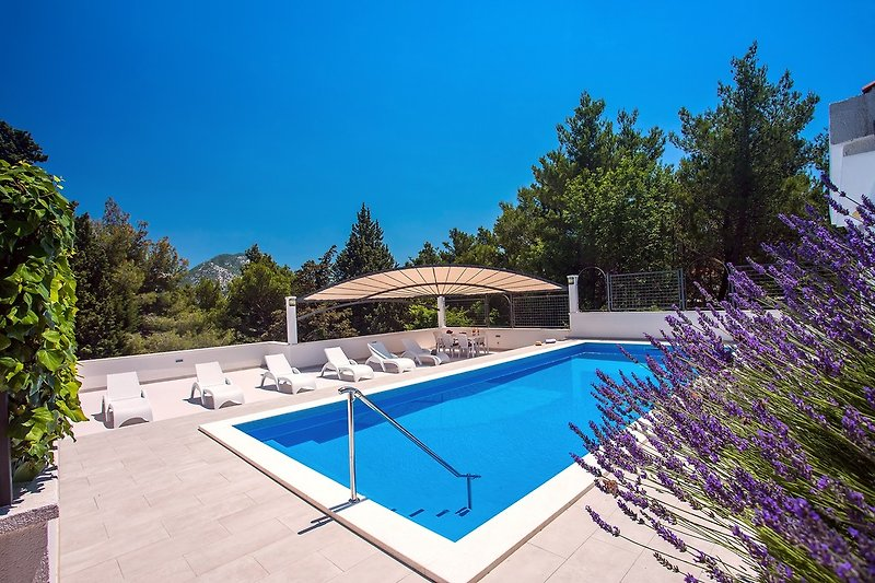 40m2 Pool mit Sitzbank, auf der Sie Ihren Rücken massieren können
