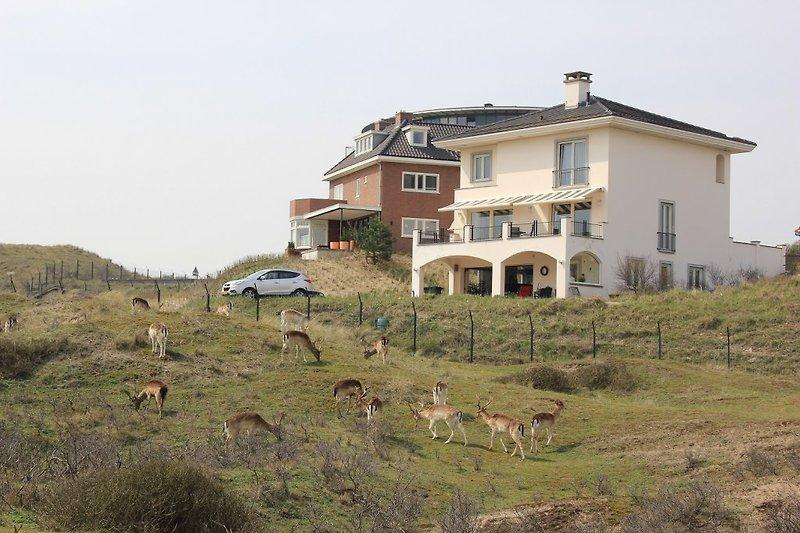 Die Ferienwohnung befindet sich am unteren Rand des Hauses