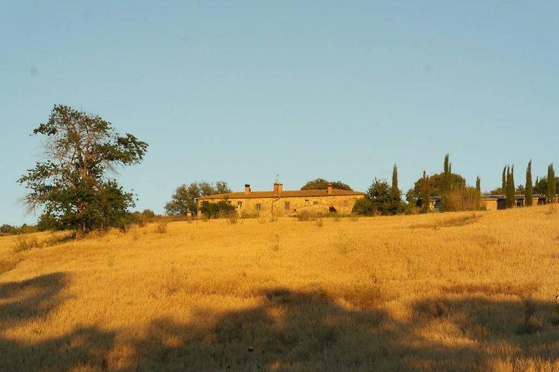 Biobauernhof mit 4 Ferienwohnungen  in Radicondoli - Bild 2