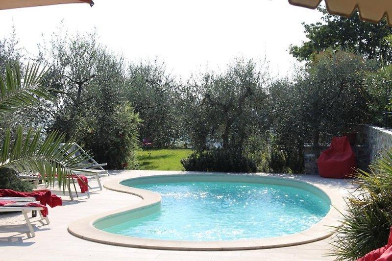 Unser schöner Pool inmitten von Olivenbäumen.