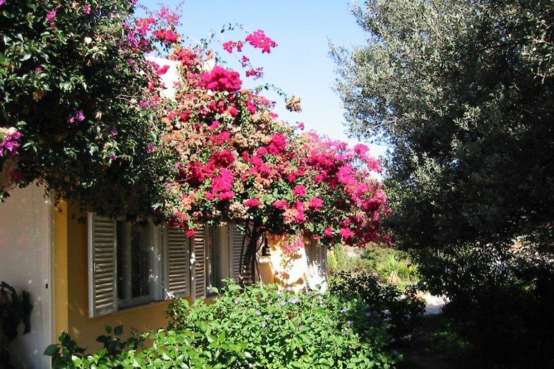 Blumen rund ums Haus