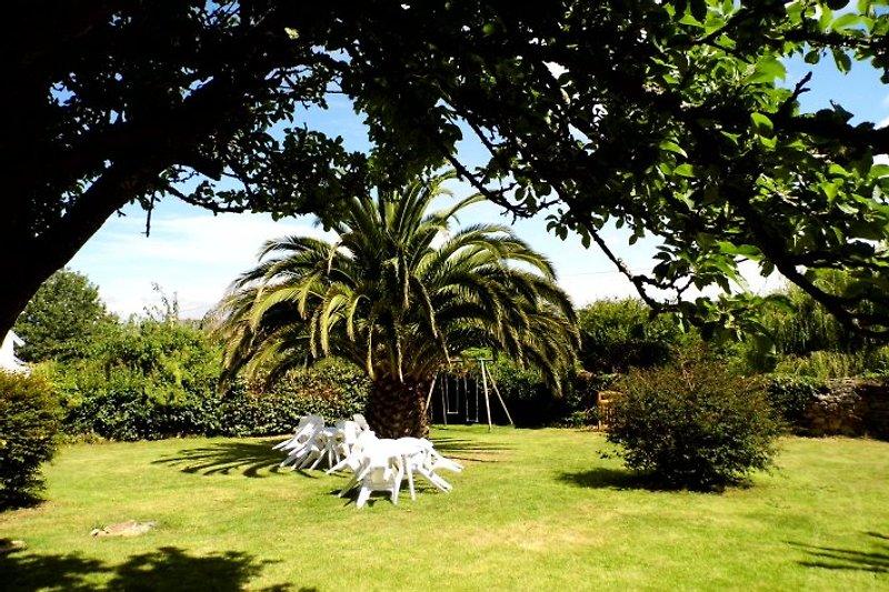Blick vom Haus in den Garten