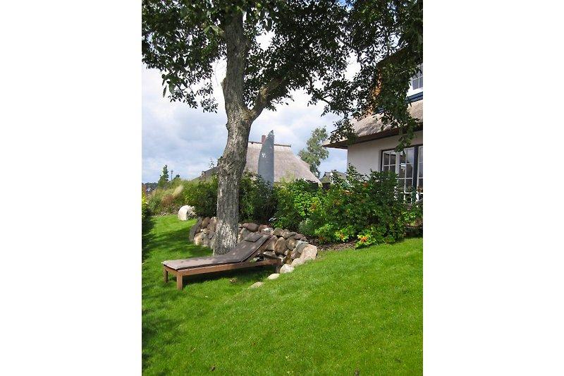 Unter dem Walnussbaum