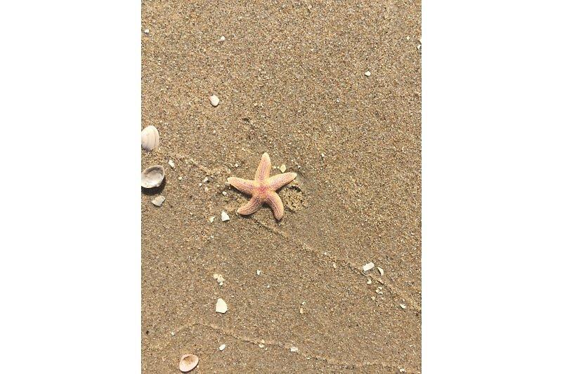 Seestern 252 Strandslag ferienhaus toewe