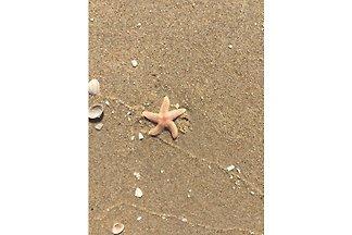 Starfish 252 Strandslag Toewe