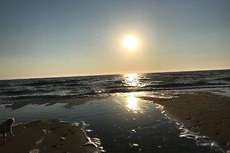 Seestern 60 Strandslag