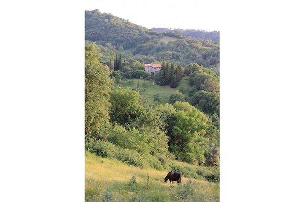 Casa Ellena à Polveraia - Image 1