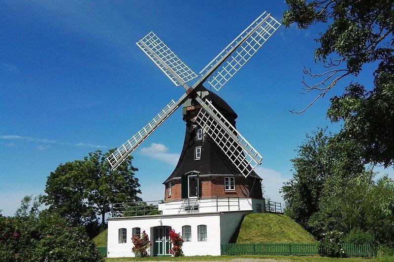 Mühle Catharina von 1786