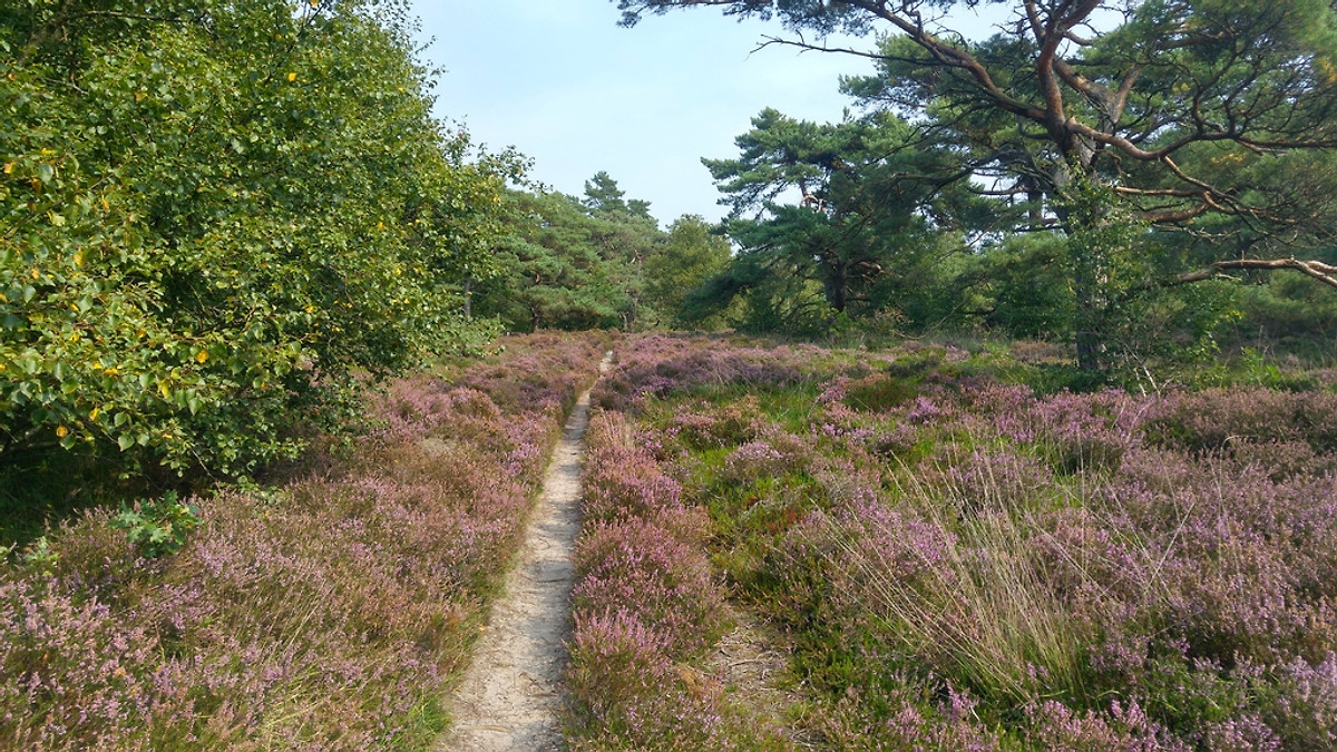 Dunes and Mee (h) r, for allergy sufferers - Holiday home in Schoorldam