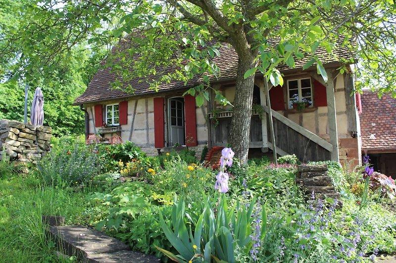 La maison dans son environnement verdoyant