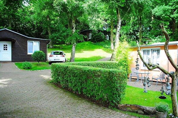 Igelhaus- im Hintergrund