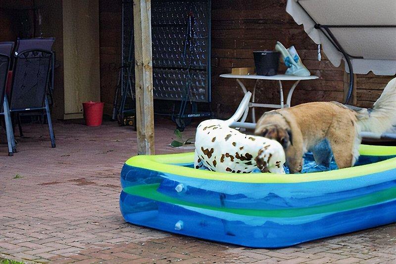 Lilly im Pool und Gast Hund
