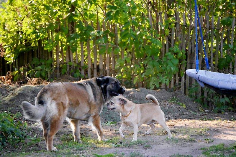 Lilly mit Hund von Gästen