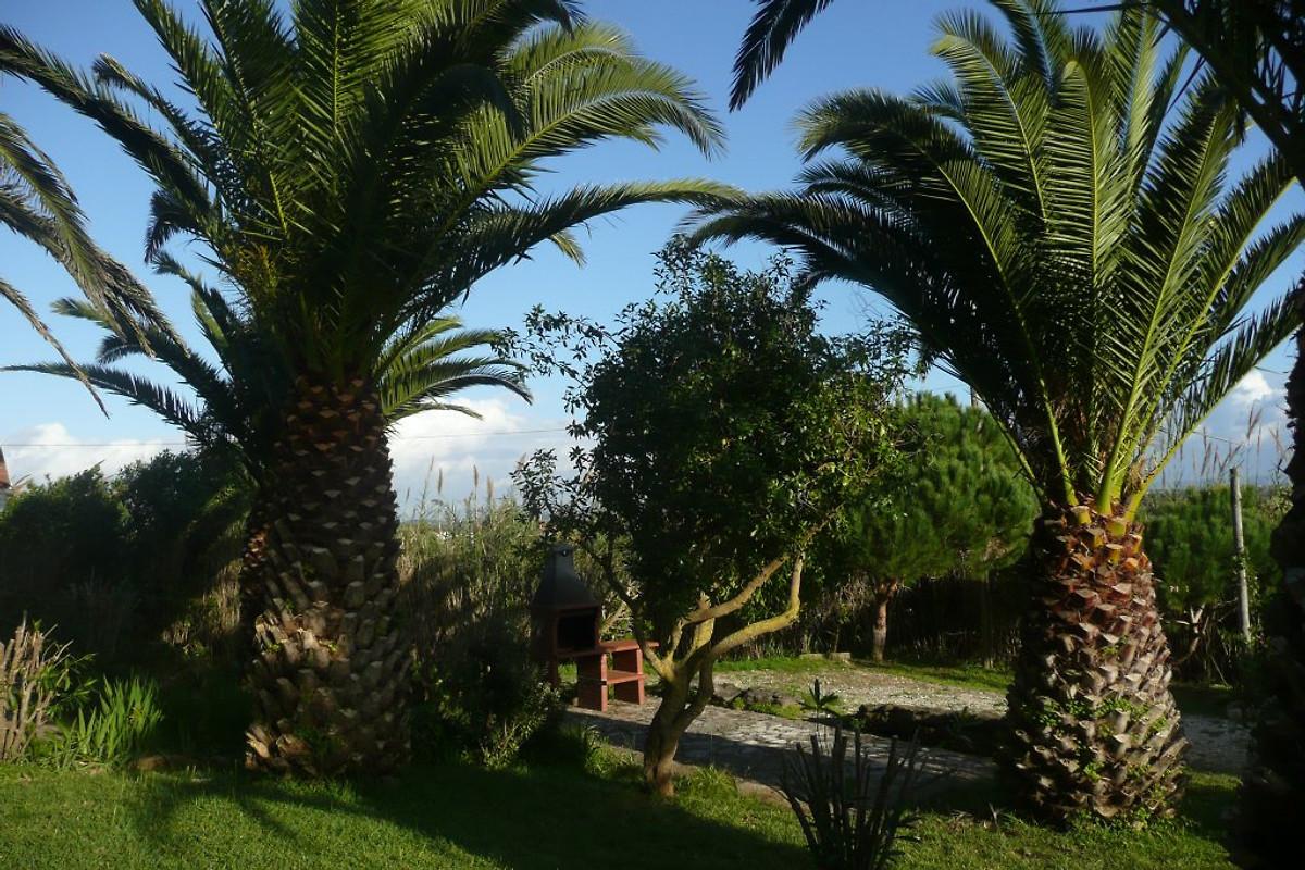 Palmengarten schnell datiert