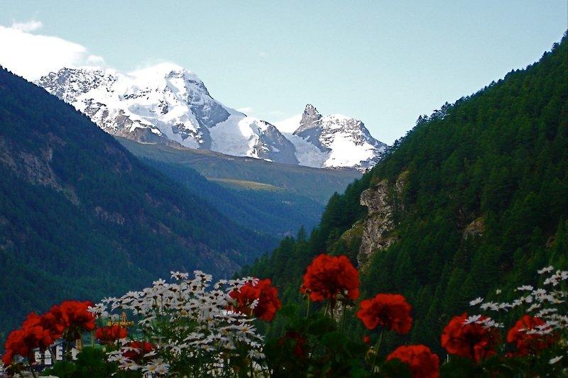 Monte Rosa im Sommer
