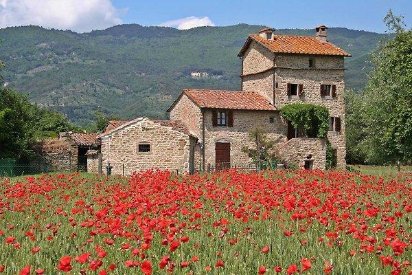 Montalla TORRE in Cortona - Bild 1