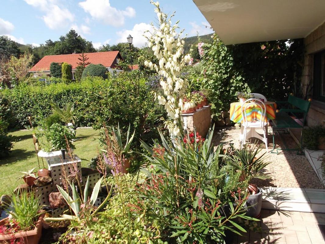 Haus brigitte ferienwohnung in ilsenburg mieten - Vorgarten eingangsbereich ...