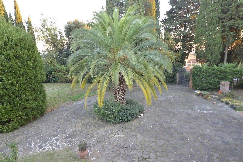 Palme vor dem Haus