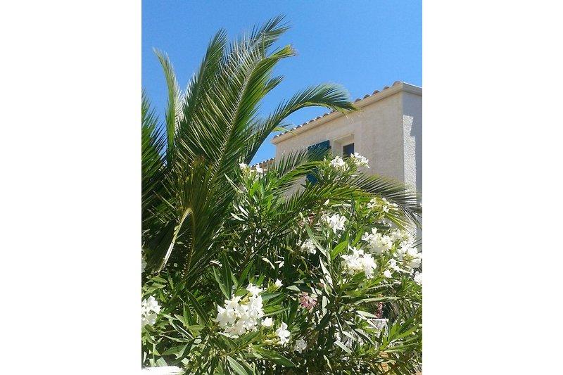 Ferienhaus mit eingewachsenem Garten