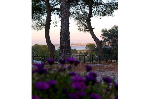 Finca in pineta in Torrevieja - immagine 1