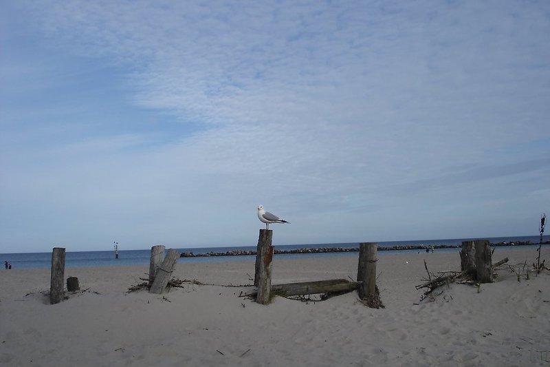 Strand 0.3 km entferntrand