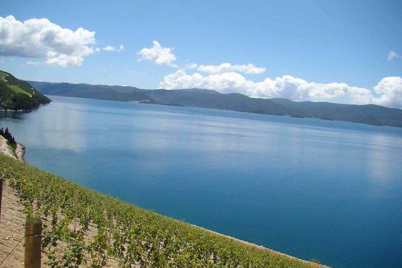 View across the vineyard towards the sea