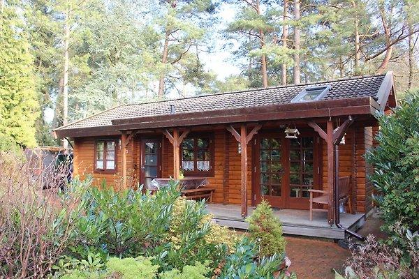 Ferienhaus Eichhörnchenkobel in Haren-Dankern - Bild 1