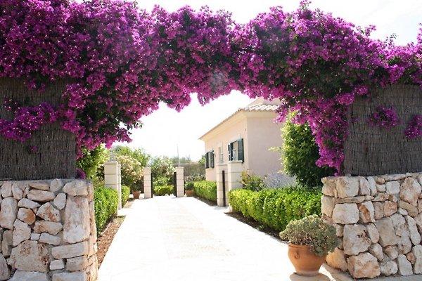 Casa Olivo in Sa Rapita Es Trenc - immagine 1
