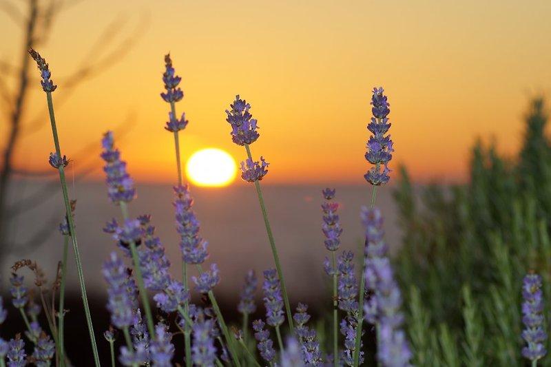 Sonneuntergang und Lavender