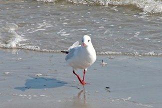 Ferienwohnung - Strand 18